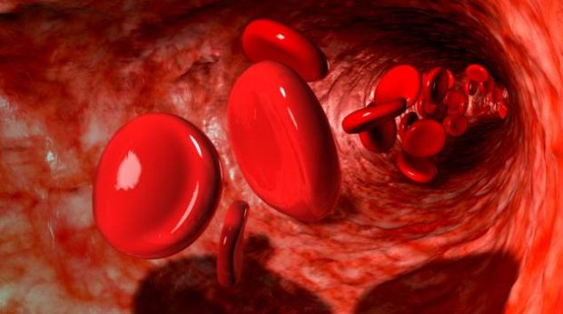 Morfologia: HEMOGLOBINA