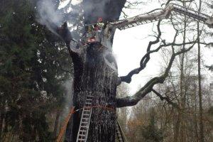 Podpalony kilka miesi�cy temu d�b Chrobry wypuszcza p�ki! Drzewo prze�y�o po�ar?