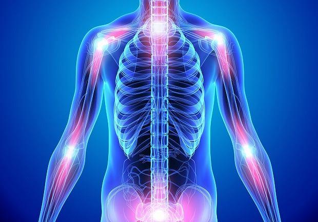 Staw to połączenie ruchome minimum dwóch kości