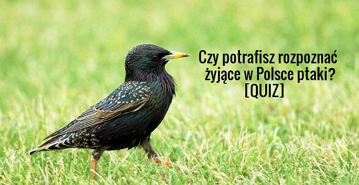 Czy Potrafisz Rozpoznać żyjące W Polsce Ptaki Quiz