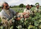 Wojnę w Afganistanie wygrali hodowcy maku