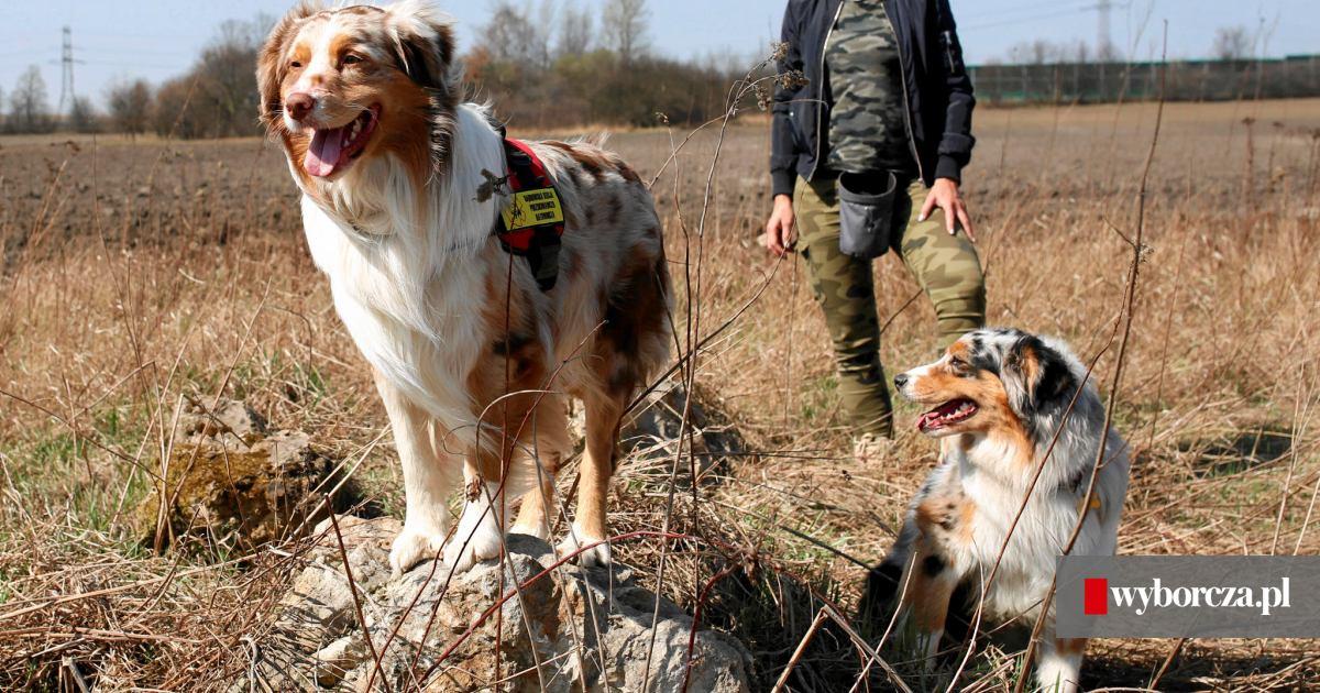 546a21f01f50a Jaki pies pasuje do ciebie? Czy ty pasujesz do psa?