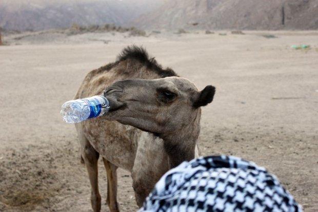 10 powod�w, dla kt�rych Egipt to najlepsze miejsce na urlop