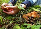 Om�wienie quizu grzybiarskiego