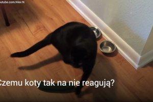 Ludzie strasz� koty og�rkami. A nie powinni