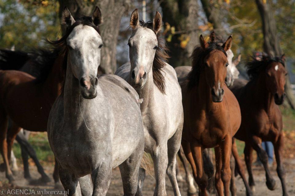 Stadnina koni w Michałowie