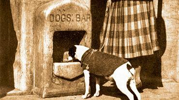 Bar dla psów - wynalazek zgłoszony w londyńskim Patent Office. Bary te produkowała firma kamieniarska Stones and Sons. Niestety szybko zostały usunięte - ludzie w nocy masowo nalewali do nich alkohol.