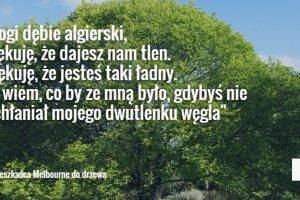 ''Drogi d�bie, dzi�kuj�, �e dajesz nam tlen'', ''przykro mi, �e umrzesz'', ''kocham ci�, na zawsze''. Ludzie pisz� �ciskaj�ce za gard�o listy do drzew