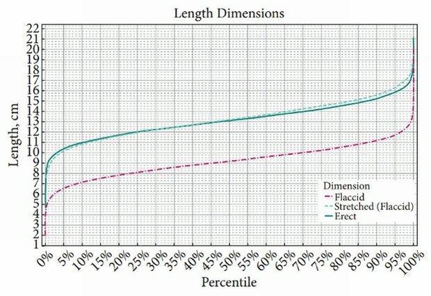 europejski rozmiar penisa