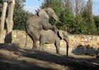Patrol w zoo pilnuje dobrych obyczaj�w. Muzyczna parodia [WIDEO]