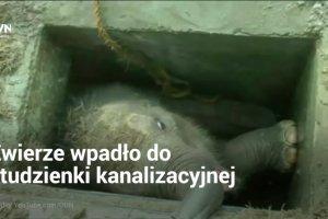 Mały słonik wpadł do studzienki. Jego piski usłyszeli pracownicy pobliskiego portu