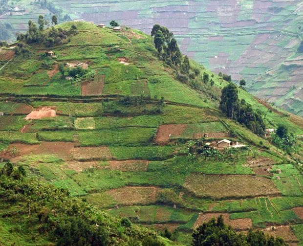 Góry Viruga, Uganda / fot. Shutterstock