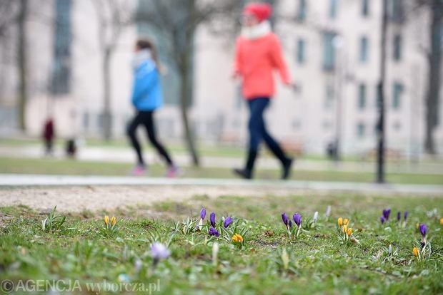 Jeszcze kilka zimniejszych dni i wkracza wiosna. Po niedzieli nawet 15 stopni