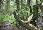 To miał być spokojny spacer po lesie pod Poznaniem. Nie mogła uwierzyć w to, co zobaczyła
