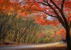 Nie musisz kochać drzew - wystarczy, że kochasz siebie i swoich bliskich!