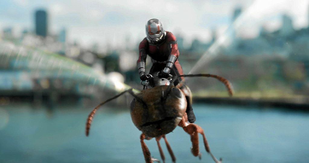 Ant-man i osa / DISNEY