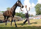 Arabska wiosna w stadninach koni. Odwołani dyrektorzy odrzucają wszystkie zarzuty