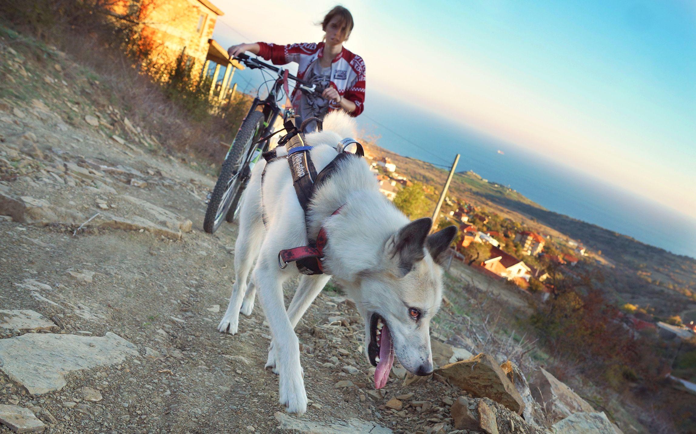 Podróż z psem w Bułgarii (fot. archiwum prywatne)