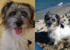Szukamy bohaterek, które uratowały psa z Warty. Właścicielka chce je uściskać