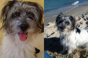 Szukamy bohaterek, kt�re uratowa�y psa z Warty. W�a�cicielka chce je u�ciska�