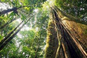 Drzewa potrafi� wzywa� deszcz, rozmawia� ze sob�, a nawet podr�owa�. 7 fakt�w o lasach, o kt�rych nie mia�e�/a� poj�cia! [ZDJ�CIA]