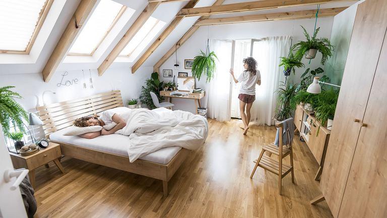 Rośliny doniczkowe w mieszkaniu