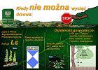 W Sopocie nadal nie można wyciąć drzewa bez pozwolenia. Samorządy bronią się przed liberalnym prawem PiS