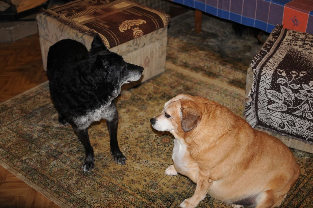 Swoje psy pani Krystyna otacza troskliwą opieką, pomagają jej w tym hojni darczyńcy (fot. Mateusz Witkowski)