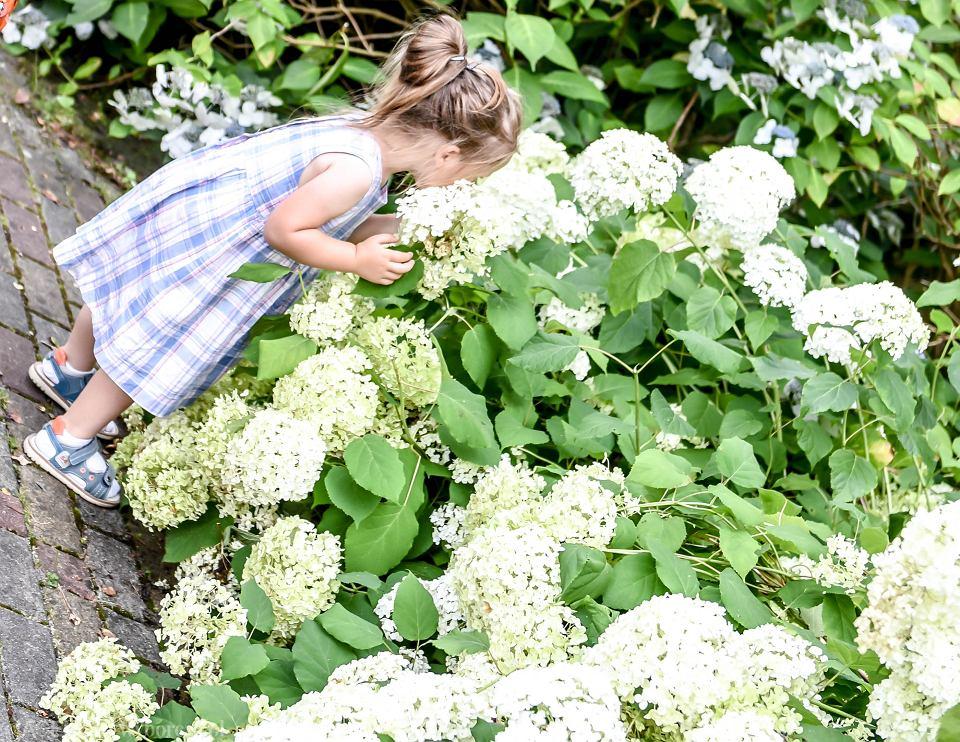 Te Kwiaty Sa Cudowne Ogrod Botaniczny Mieni Sie Kolorami Teraz