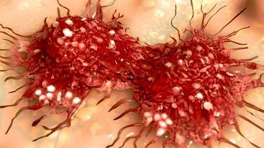 Podczas rozwoju raka dochodzi do kumulacji błędów genetycznych (na ilustracji przedstawiono wizualizację niekontrolowanego podziału komórek rakowych)