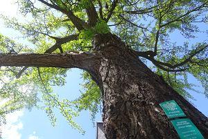 Dęby, sosny czy brzozy? Jakie drzewa najlepiej sadzić w mieście