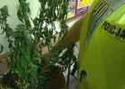 TK: zakaz posiadania marihuany do cel�w medycznych - nieuzasadniony