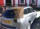 """Pszczoły śledziły ten samochód przez dwa dni. """"Nigdy w życiu czegoś takiego nie widziałem"""""""