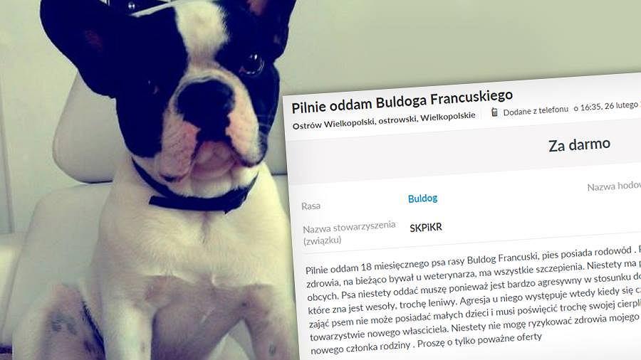 Rodzic Z Ostrowa Wielkopolskiego Pozbywa Się Psa Bo Ma Jeden Ważny