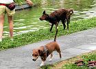 W�a�ciciel psa zap�aci gminie podatek