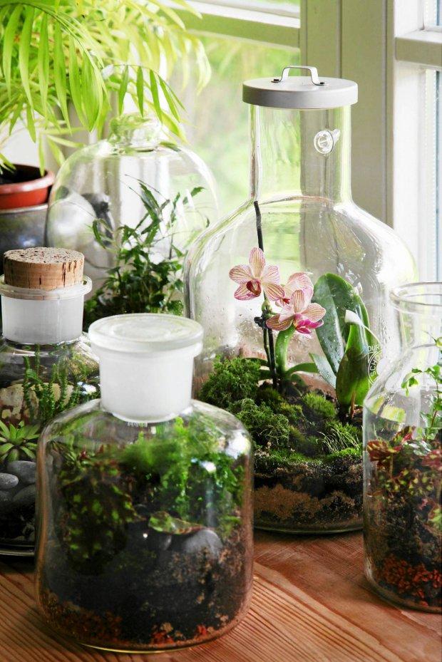 Flaschen bepflanzen und pflegen prima klima im glas for Pflanzen im glas