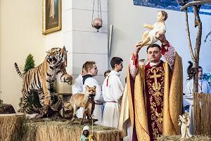"""Wypchany tygrys i inne dzikie zwierzęta na pasterce myśliwych we Wrocławiu. """"Widok był przerażający"""""""