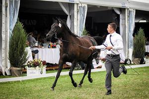 Byli szefowie stadnin organizują własną aukcję koni. I zapewniają: Nie chodzi o zemstę