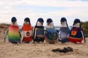 """Akcja """"Dzianina dla pingwina"""". Chcesz uratowa� ma�ego pingwina? Wydziergaj mu sweterek"""
