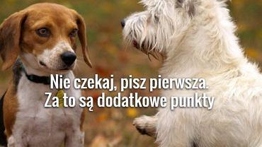 fot. foch.pl/pexels.com