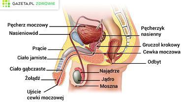 objawy prostaty w jakim wieku