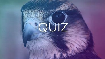 To najprostszy quiz jaki zrobili�my. Trzeba wskaza� dobry kolor