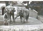 Rozstrzelany zwierzyniec, czyli zag�ada wroc�awskiego zoo