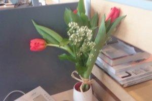 Jak odświeżyć tulipany?