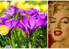 Typ kolorystyczny Pani Wiosna: jaka jest? Jakie kolory jej pasują, a jakich powinna unikać?