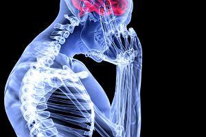 Uk�ad nerwowy - badania