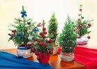 Ro�liny Bo�ego Narodzenia