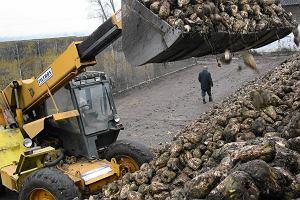 Rząd chce połączyć państwowe spółki rolno-spożywcze