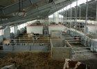 Nasi podbijają łotewski rynek rolny. I szukają rąk do pracy