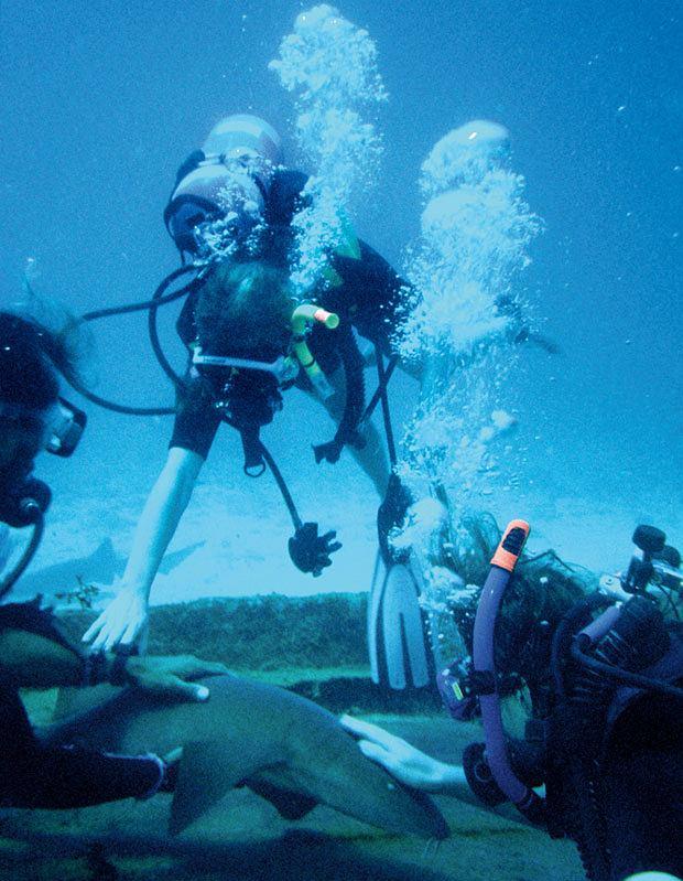 ameryka północna, podróże, wakacje, W krainie Majów: podróż do Belize, Głaskanie rekina, trochę jak z obcym dobermanem.